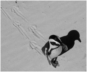 pinguin on the beach
